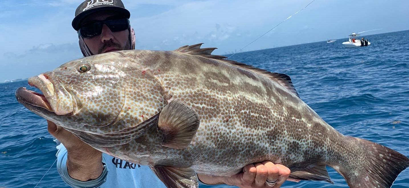 key west black grouper