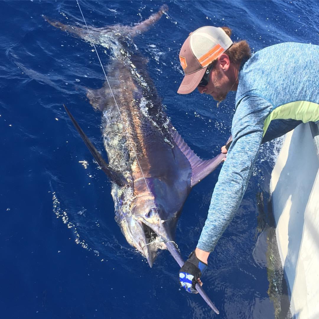 blue marlin release miami