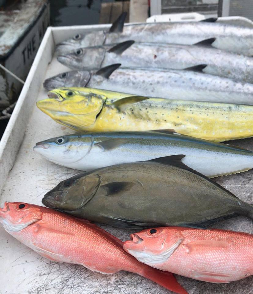 Variety of Fish off Miami