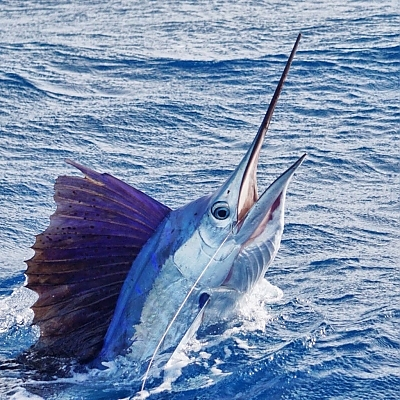 Fishing Charters in South Florida - South Florida Fishing